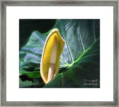 Floral 2 Framed Print