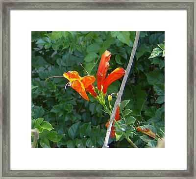 Floral 3 Framed Print by Dan Twyman