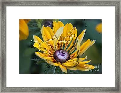 Floral 3 Framed Print