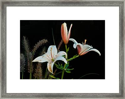 Floral Arrangement Framed Print by Dan Ferrin