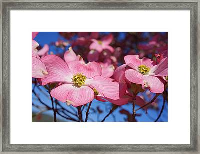 Floral Art Print Pink Dogwood Tree Flowers Framed Print by Baslee Troutman