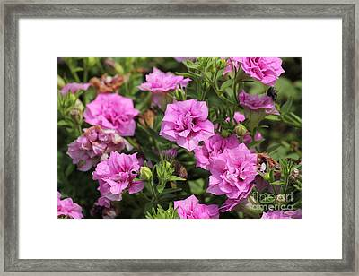 Floral Beauties Framed Print