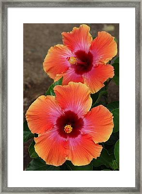 Framed Print featuring the photograph Floral Beauty 2  by Christy Pooschke