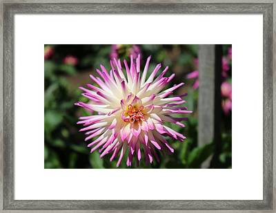 Framed Print featuring the photograph Floral Beauty 3  by Christy Pooschke