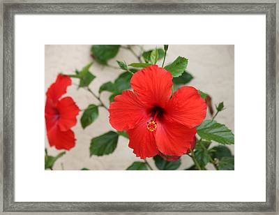 Framed Print featuring the photograph Floral Beauty  by Christy Pooschke