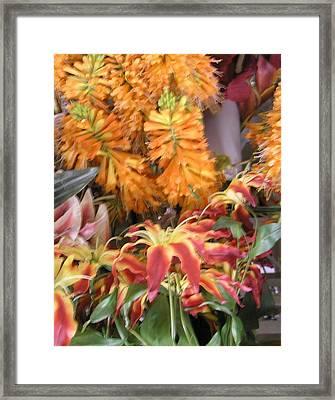 Floral Candy Framed Print