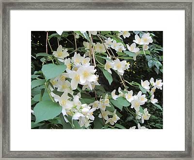 Floral Cascade Framed Print