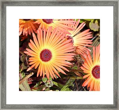 Framed Print featuring the photograph Floral by Cathy Mahnke