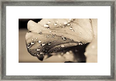 Floral Close-up IIi Framed Print by Marco Oliveira