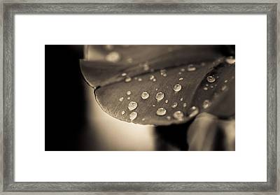 Floral Close-up Iv Framed Print by Marco Oliveira