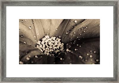 Floral Close-up V Framed Print by Marco Oliveira