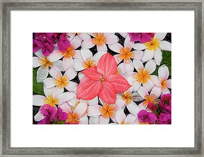Floral Decoration, Palau Pangkor Laut Framed Print by Peter Adams