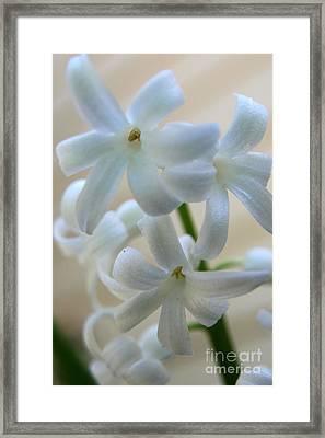 Floral Design Framed Print by Neal Eslinger
