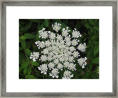 Floral Disc Framed Print by Sonali Gangane