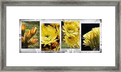 Floral Display Framed Print by Kelley King