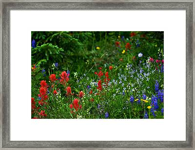 Floral Explosion Framed Print by Jeremy Rhoades