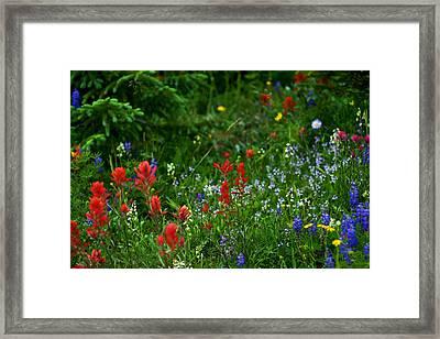 Floral Explosion Framed Print