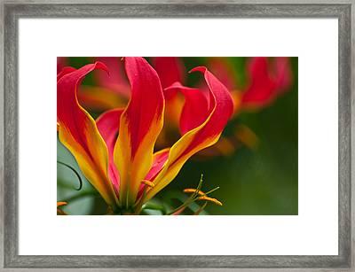 Floral Flames Framed Print by Sabine Edrissi