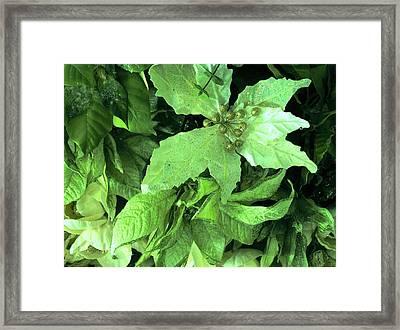 Floral In Green Framed Print
