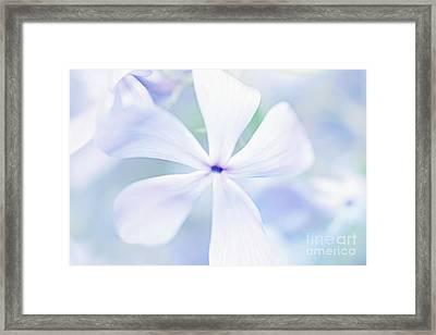 Floral In Pastel Tones Of Blue Framed Print by Natalie Kinnear
