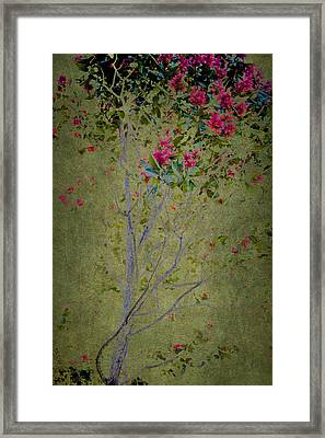 Framed Print featuring the photograph Floral Interlace by Linde Townsend
