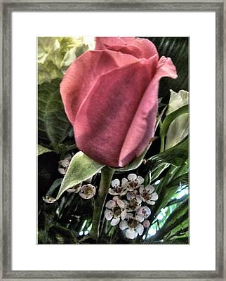 Floral Mix One Red Rose Framed Print by Danielle  Parent