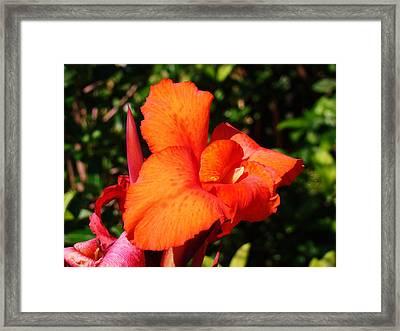 Floral Orange Framed Print by Van Ness