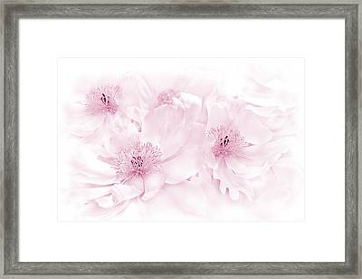 Floral Peonies In Pink Framed Print by Jennie Marie Schell