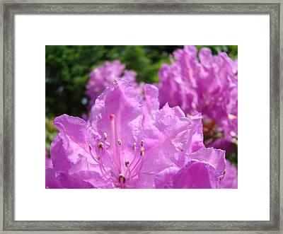 Floral Photography Fine Art Prints Rhodies Framed Print