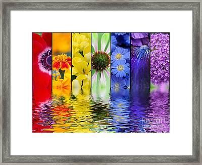 Floral Rainbow Framed Print by Tim Gainey