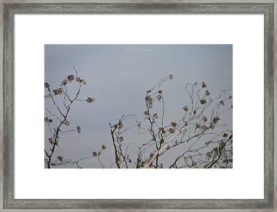Floral Reflection Framed Print by Sonali Gangane