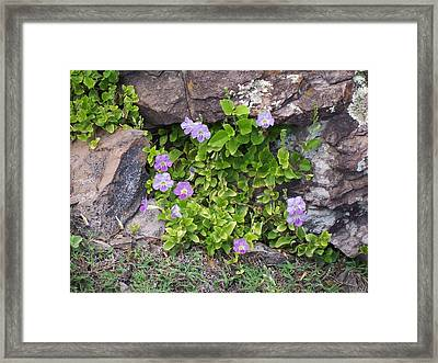 Framed Print featuring the photograph Floral Relief by Sheila Byers