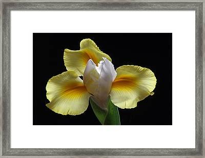 Floral Roar Framed Print