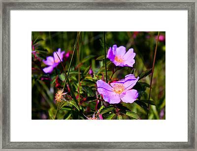 Floral Saturation Framed Print