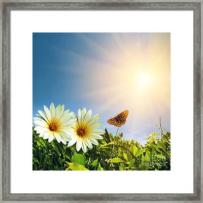 Floral Spring Framed Print by Carlos Caetano