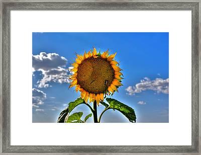 Floral Sunshine Framed Print