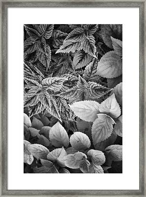 Floral Tones At Biltmore Framed Print