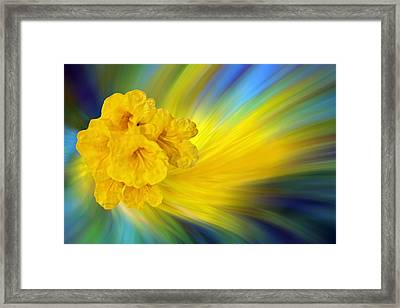 Floral Trumpets Abstract Framed Print by Linda Phelps