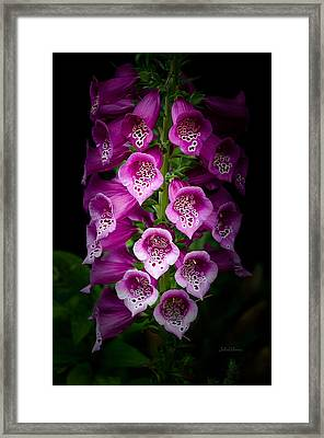Floral Trumpets Framed Print by Julie Palencia