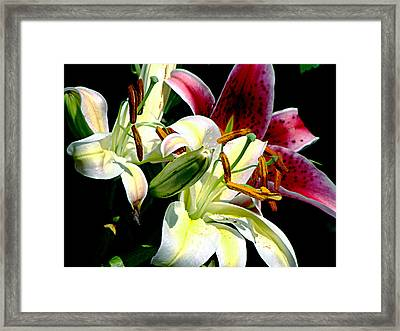 Framed Print featuring the photograph Florals In Contrast by Ira Shander