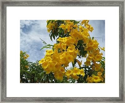 Flores Mil  3 Framed Print by Maria Akemi  Otuyama