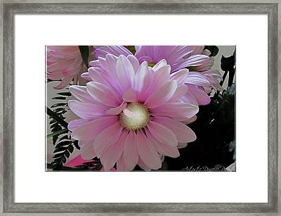 Florescence In Lavender Pink Framed Print by Danielle  Parent