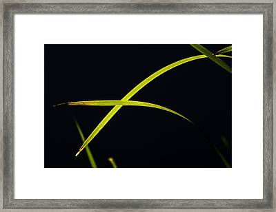 Florescent Blades Framed Print by Curtis Knight
