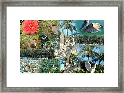 Florida Birds And Trees Framed Print