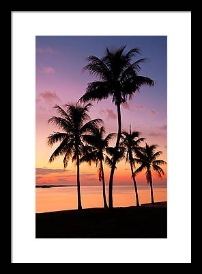 Tropic Framed Prints