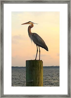 Florida Crane Framed Print