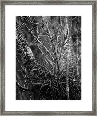 Framed Print featuring the photograph Florida Everglades by Joseph G Holland