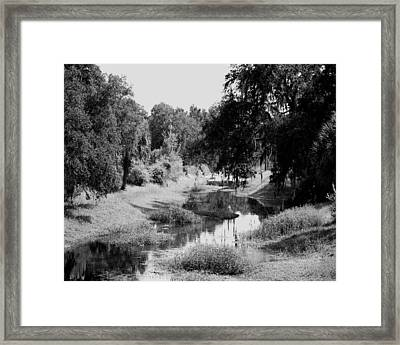 Framed Print featuring the photograph Florida Everglades Lan 265 by G L Sarti