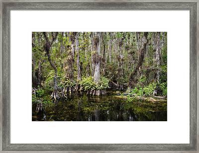 Florida Everglades Tropical Landscape - Big Cypress Swamp Framed Print