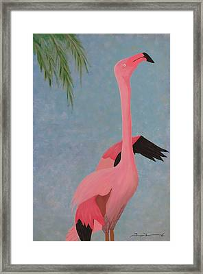 Florida Flamingo Framed Print by Tim Townsend